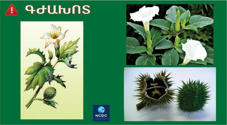 Թունավորման դեպքեր բույսերից